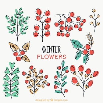 Selection of hand-drawn winter plants