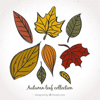 Selection of leaves in different colors
