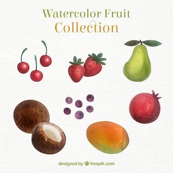 수채화 스타일의 맛있는 과일 선택
