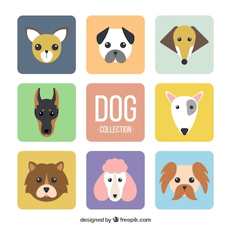 Выбор из восьми плоских собак с различными типами пород