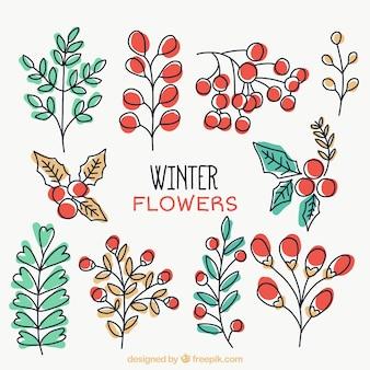 手描き冬の植物の選択
