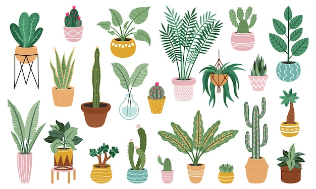 Подбор растений в горшках