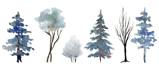 Selection of winter trees and shrubs