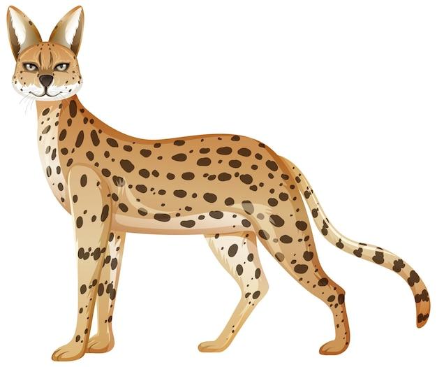 Animale serval isolato su sfondo bianco
