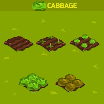 Set 12. isometric stage of growth cabbage