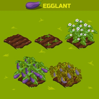 Set 2. isometric stage of growth eggplant