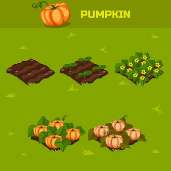 Set 5. isometric stage of growth pumpkin