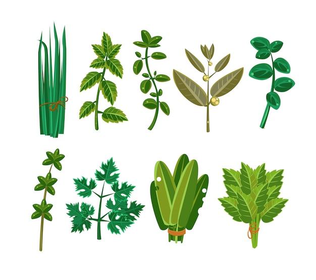Set of 9 herbs
