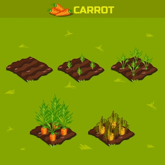 Set 9. isometric stage of growth carrot