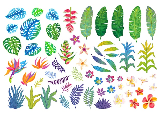 Set of abstract tropical plants, flowers, leaves jungle illustration