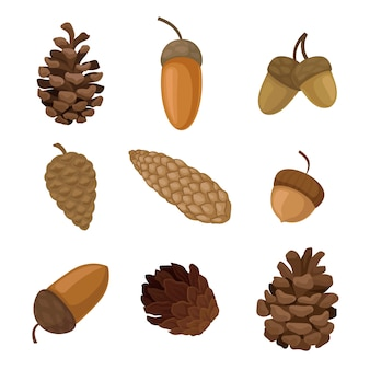 Set of acorns and spruce cones.
