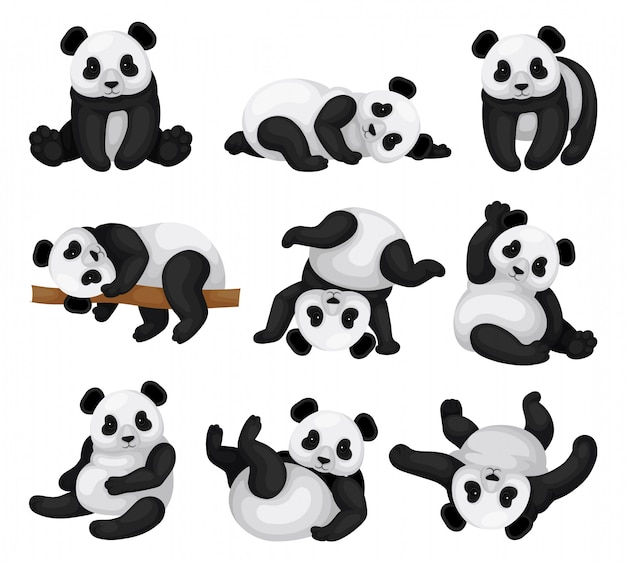 Set of adorable panda in different poses. funny bamboo bear with black and white fur and shiny eyes. exotic mammal animal. graphic elements for children book. isolated flat  illustrations.