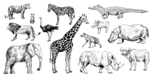 Набор африканских животных на белом фоне коллекция жираф, слон, носорог, бегемот, буйвол