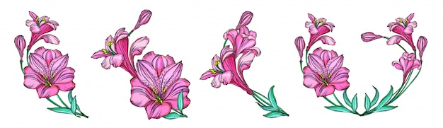 Set of alstroemeria flowers