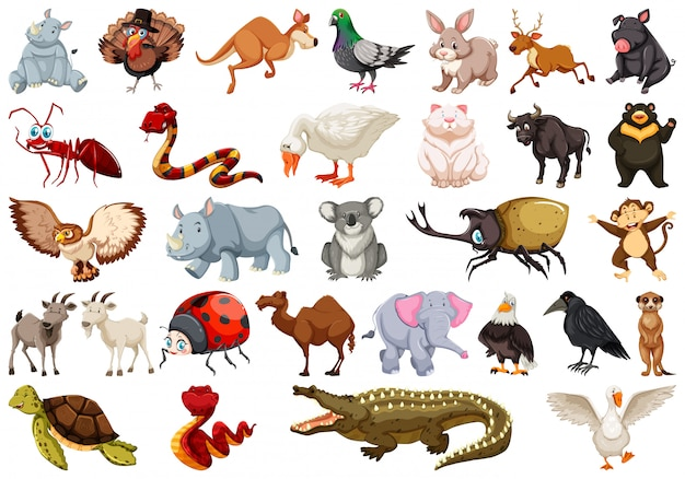 Set of animal character