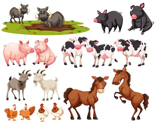 Set of animal on white background