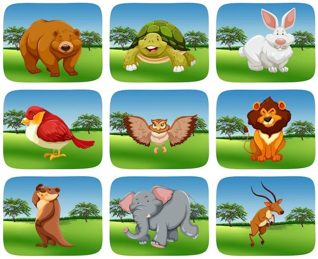 Set of animals in nature scene