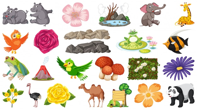 Set of animals and plants