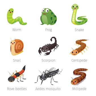 Set of animals in rainy season