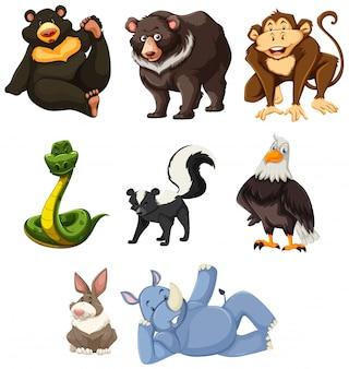 Set of animals white background