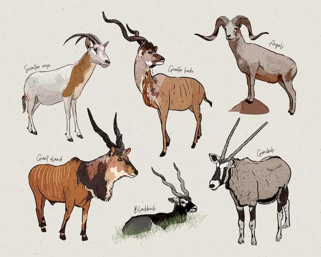 Set of antelopes, hand drawn sketch of animals