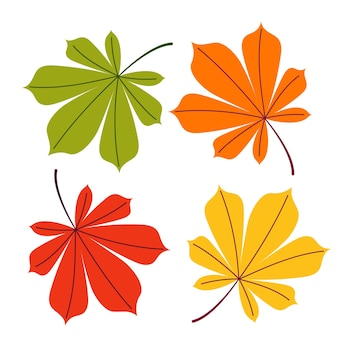 A set of autumn chestnut leaves of different colors on a white isolated background