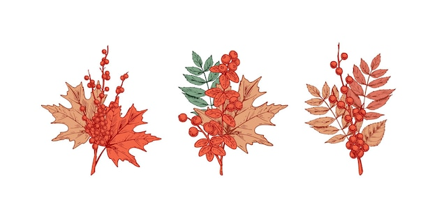 Set of autumn design elements