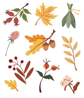 Set of autumn dried leaves, berries and flowers. collection of various acorns, maple, rosehip, cotton and branches. organic herbarium. fall forest foliage and autumnal elements vector illustrations.