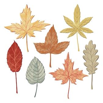 Set of autumn fall leaves