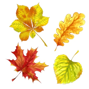 Set of autumn fallen leaves with watercolor texture.