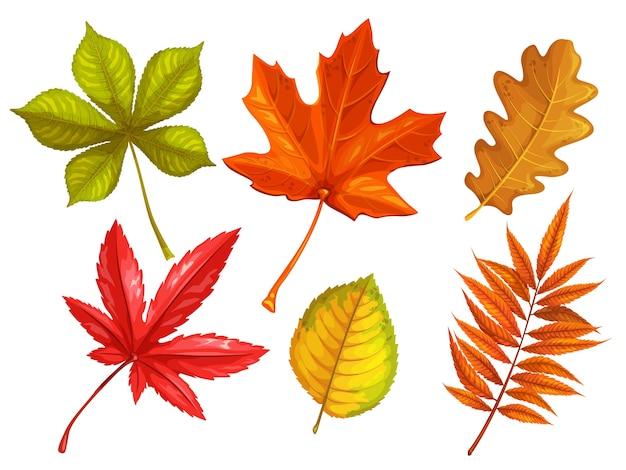 Set autumn leaves maple rhus typhina