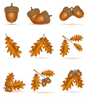 Set of autumn oak acorns with leaves vector illustration