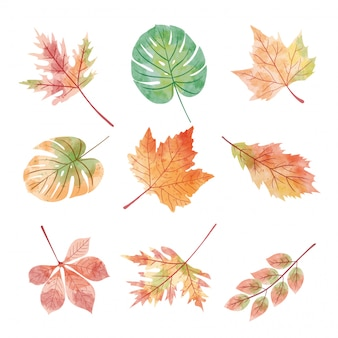 Set of autumn season leaves in watercolor