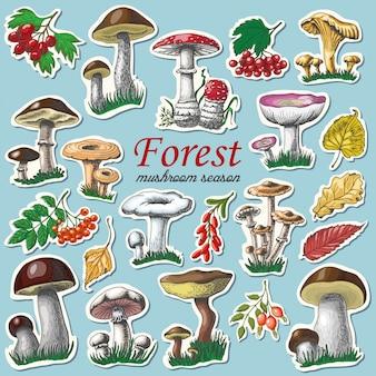 Set of autumn stickers with mushrooms and berries