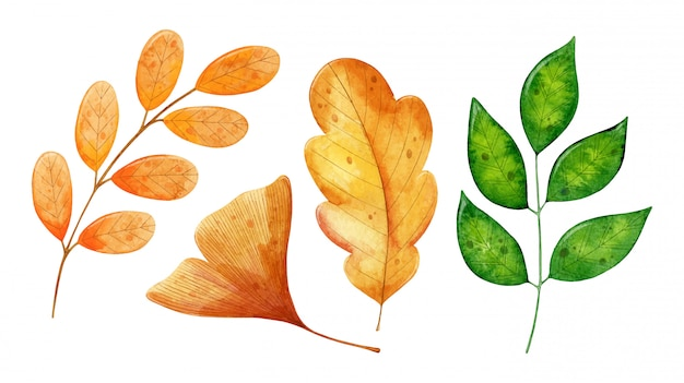 Set of autumn watercolor leaves of different plants isolated