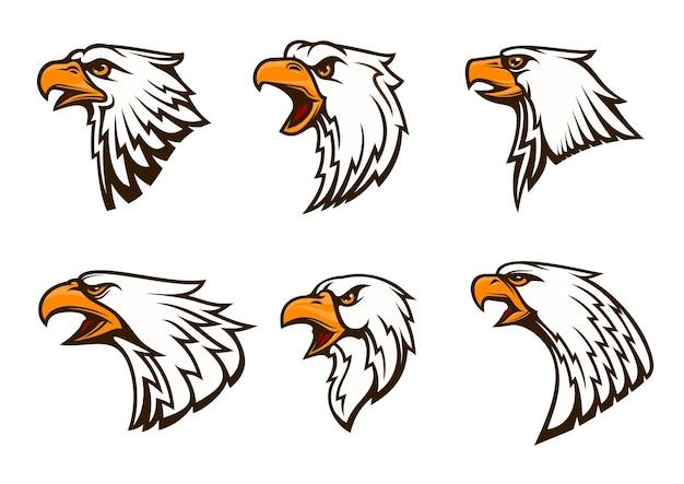 Set of bald eagle isolated on white