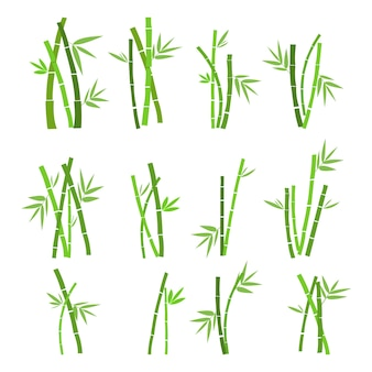 Set of bamboo plant