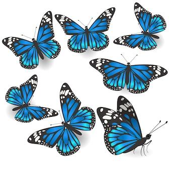 Set of beautiful blue butterflies