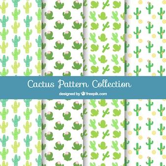 Set of beautiful cactus patterns