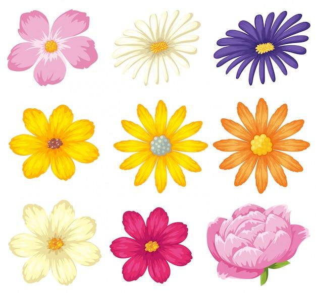 A set of beautiful flower