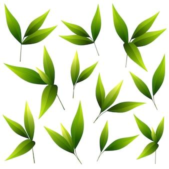 Set of beautiful green leaves