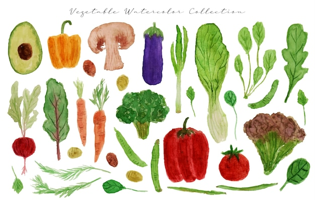 A set of beautiful hand drawn watercolor vegetables
