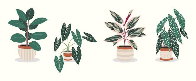 Premium Vector Set Of Beautiful House Plants In Pots
