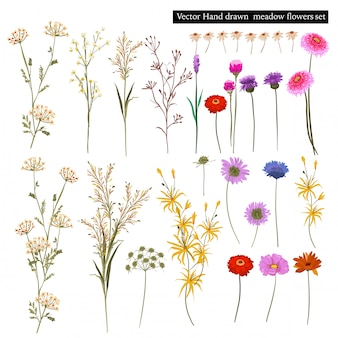 Set of beautiful meadow blooming flowers, and botanical plants isolated. hand drawn style vector illustration