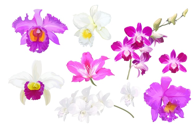Set of beautiful orchid flowers