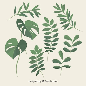 Set of beautiful plants and leaves