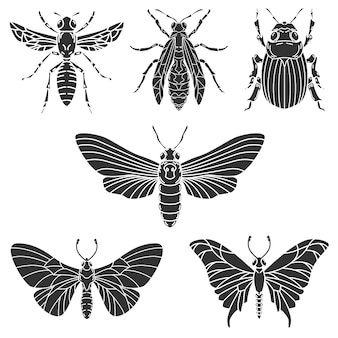 Set of beetle illustrations  on white background.