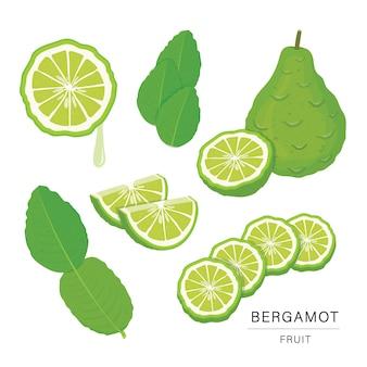 Set of bergamot fruit slices. organic and healthy food isolated element illustration.