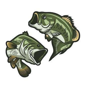 Set of big bass illustration isolated on white background