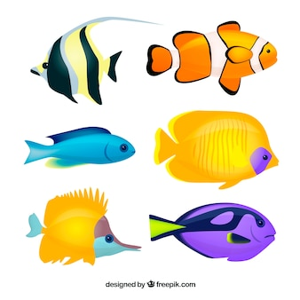 Set of big fishes in flat style